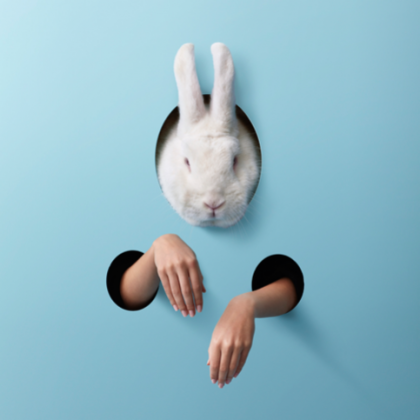 WHITE-RABBIT-RED-RABBIT-image-for-Q-website